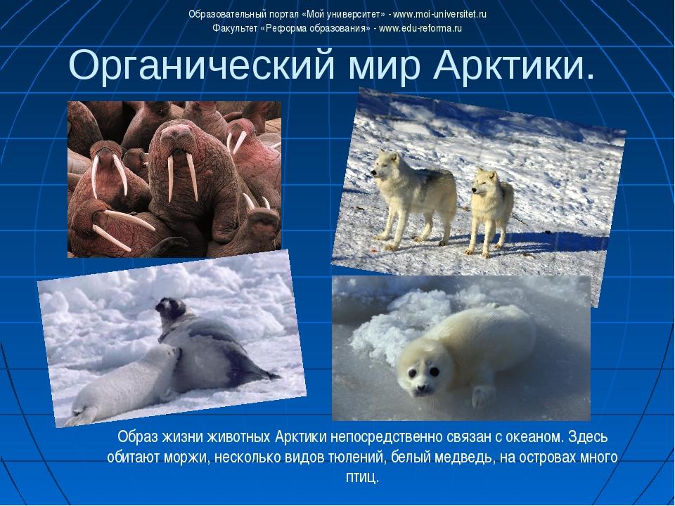 Органический мир Арктики. Образ жизни животных Арктики непосредственно связан...