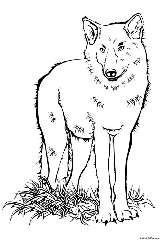 Раскраска Волк Раскраски Дикие животные