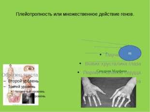 Плейотропность или множественное действие генов. Паучьи пальцы Вывих хрустали