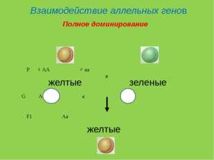 Взаимодействие аллельных генов P♀ AA♂ aa желтые зеленые G Aa F1