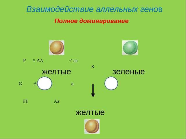Взаимодействие аллельных генов P♀ AA♂ aa желтые зеленые G Aa F1...