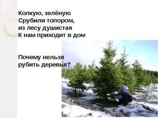Колкую, зелёную Срубили топором, из лесу душистая К нам приходит в дом Почему