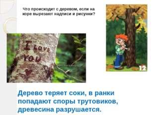 Что происходит с деревом, если на коре вырезают надписи и рисунки? Дерево тер