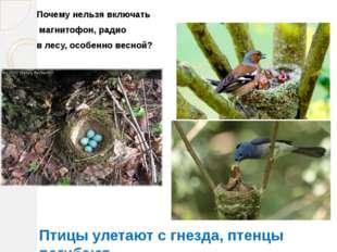 Почему нельзя включать магнитофон, радио в лесу, особенно весной? Птицы улета