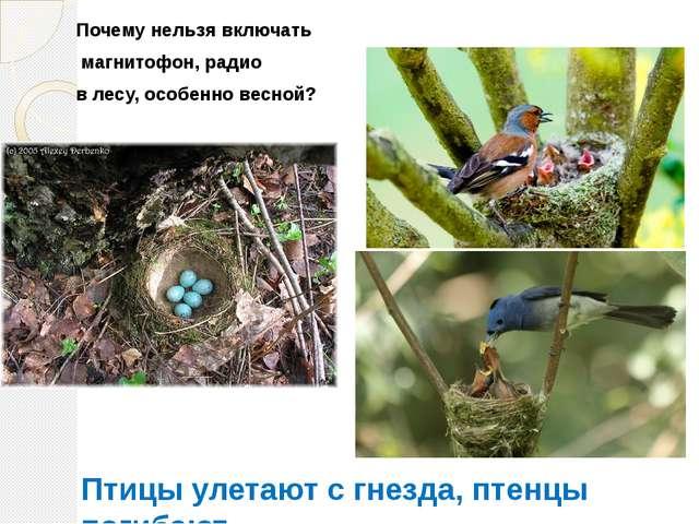 Почему нельзя включать магнитофон, радио в лесу, особенно весной? Птицы улета...