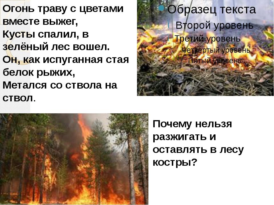 Огонь траву с цветами вместе выжег, Кусты спалил, в зелёный лес вошел. Он, ка...