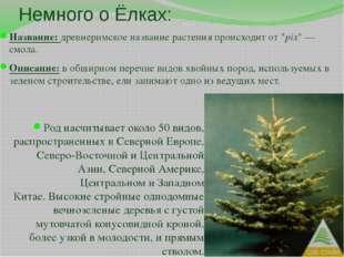 """Немного о Ёлках: Название: древнеримское название растения происходит от """"pix"""