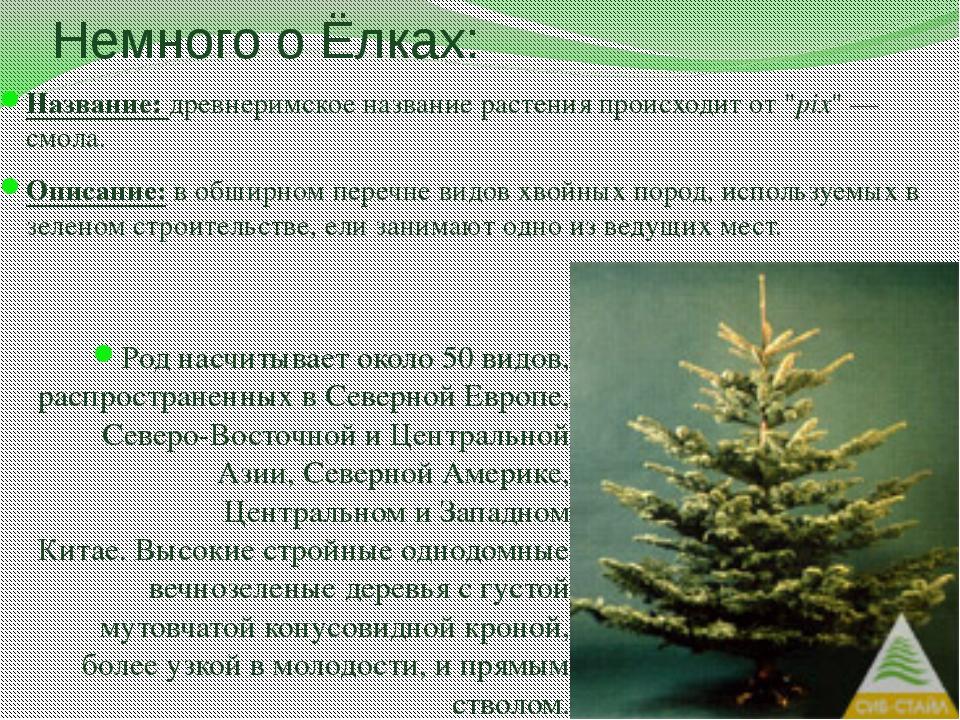 """Немного о Ёлках: Название: древнеримское название растения происходит от """"pix..."""