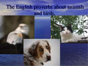 The English proverbs about animals and birds.