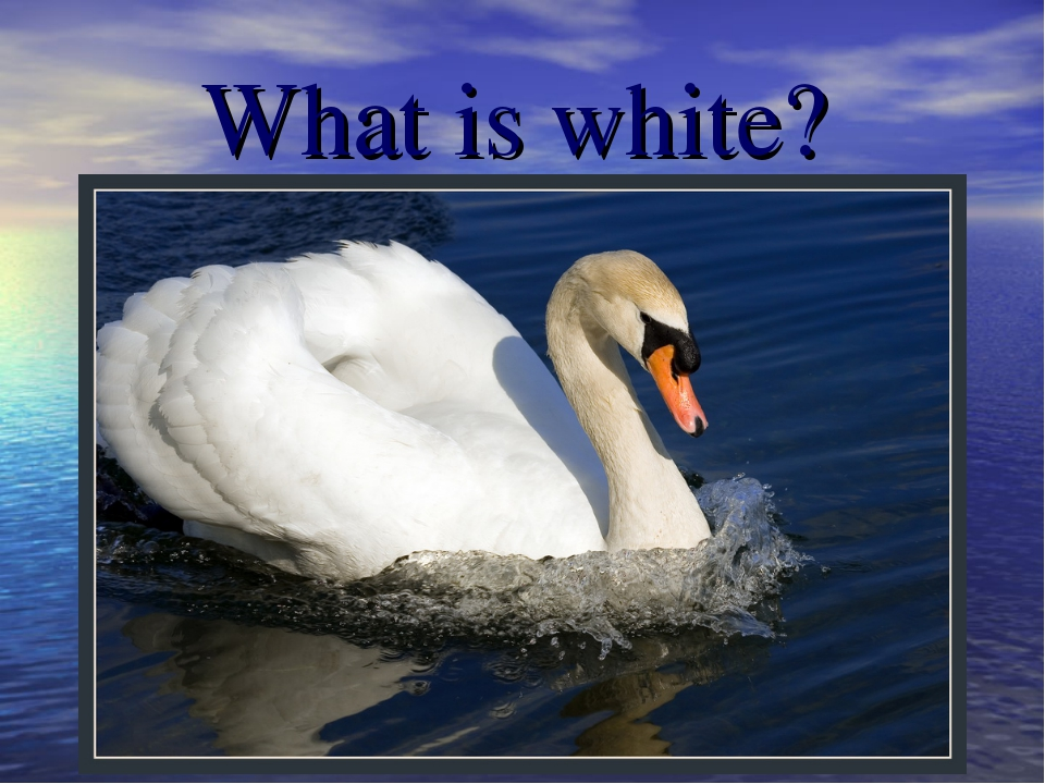 What is white?