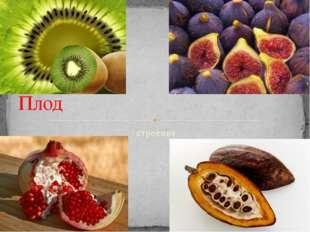 строение Плод
