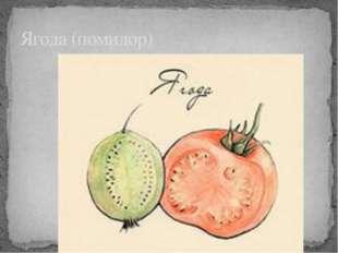 Ягода (помидор)