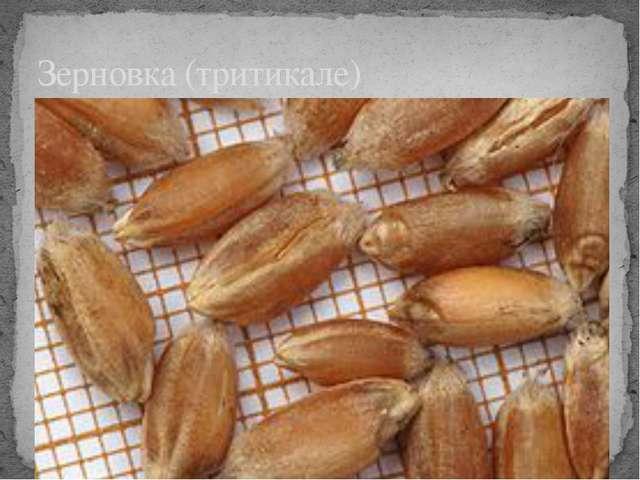 Зерновка (тритикале)