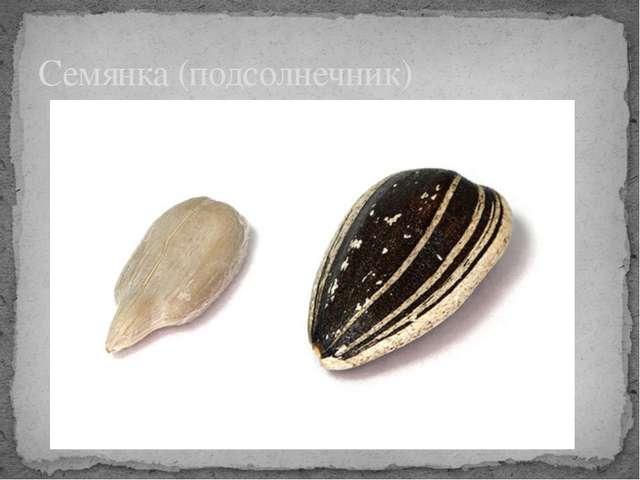 Семянка (подсолнечник)