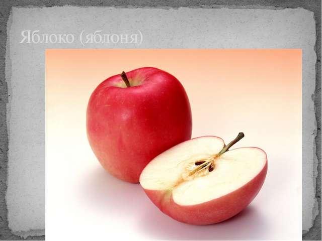 Яблоко (яблоня)
