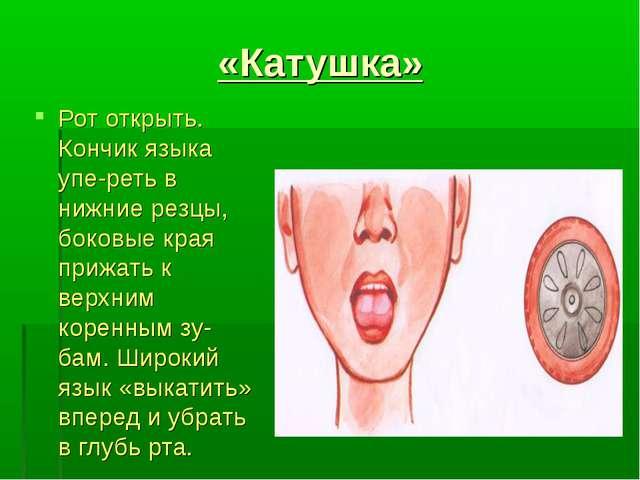 «Катушка» Рот открыть. Кончик языка упереть в нижние резцы, боковые края при...