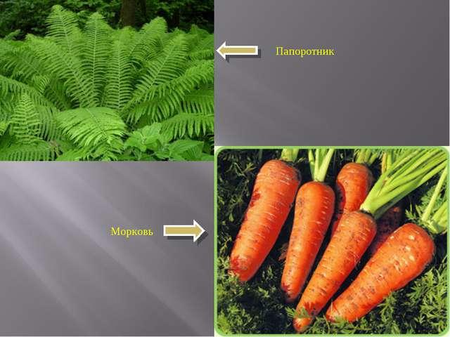 Папоротник Морковь