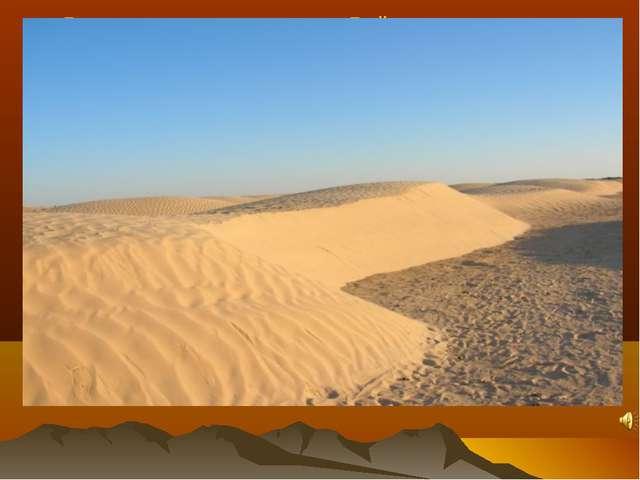 В пустыне очень жарко. Днём температура песка достигает +80° С, а воздуха +50...