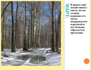 МАРТ. В марте ещё лежит много снега, но на солнце верхняя его часть покрывает