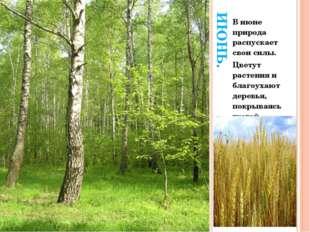 ИЮНЬ. В июне природа распускает свои силы. Цветут растения и благоухают дерев