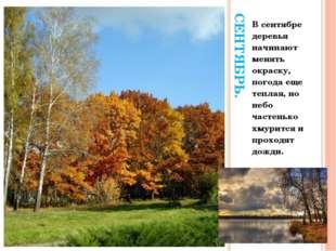 СЕНТЯБРЬ. В сентябре деревья начинают менять окраску, погода еще теплая, но н