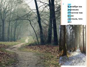 НОЯБРЬ. В ноябре на деревьях остается так мало листьев, что лес обнажается, а