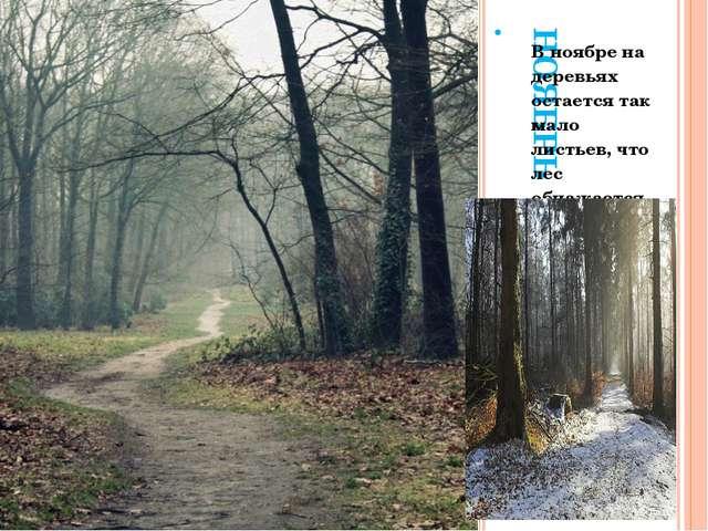 НОЯБРЬ. В ноябре на деревьях остается так мало листьев, что лес обнажается, а...
