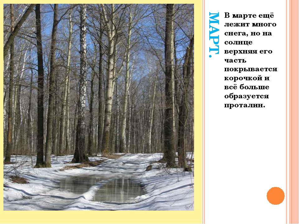 МАРТ. В марте ещё лежит много снега, но на солнце верхняя его часть покрывает...