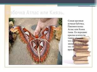 Бабочка Атлас или Князь, Самая крупная ночная бабочка, Павлиноглазка Атлас ил