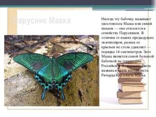 Парусник Маака Иногда эту бабочку называют хвостоносец Маака или синий махаон
