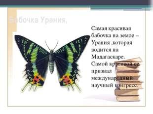 Бабочка Урания, Самая красивая бабочка на земле – Урания ,которая водится на