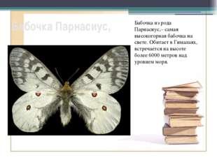 Бабочка Парнасиус, Бабочка из рода Парнасиус,– самая высокогорная бабочка на