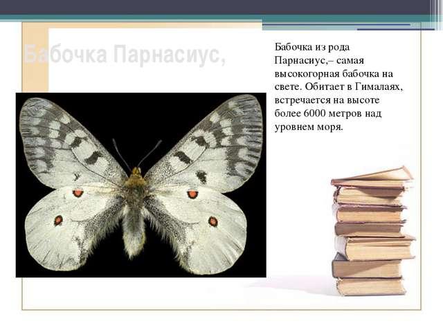 Бабочка Парнасиус, Бабочка из рода Парнасиус,– самая высокогорная бабочка на...