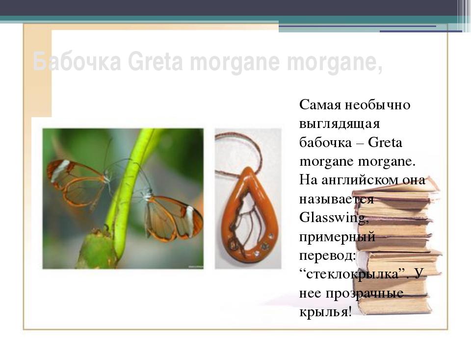 Бабочка Greta morgane morgane, Самая необычно выглядящая бабочка – Greta morg...