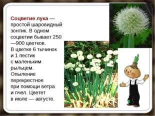Соцветие лука— простой шаровидный зонтик. Водном соцветии бывает 250—900 цв
