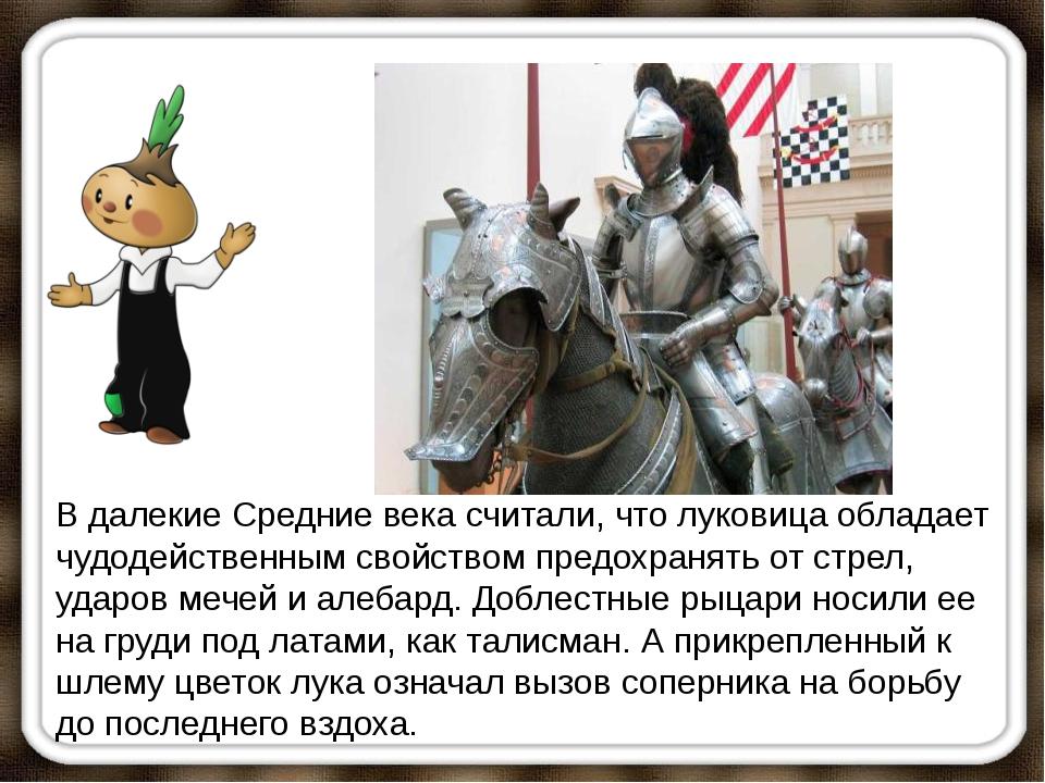 В далекие Средние века считали, что луковица обладает чудодейственным свойств...