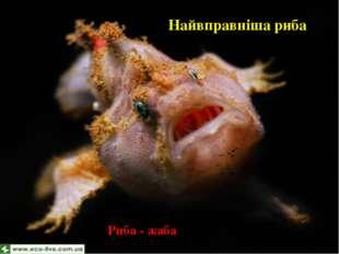 Найвправніша риба Риба - жаба-