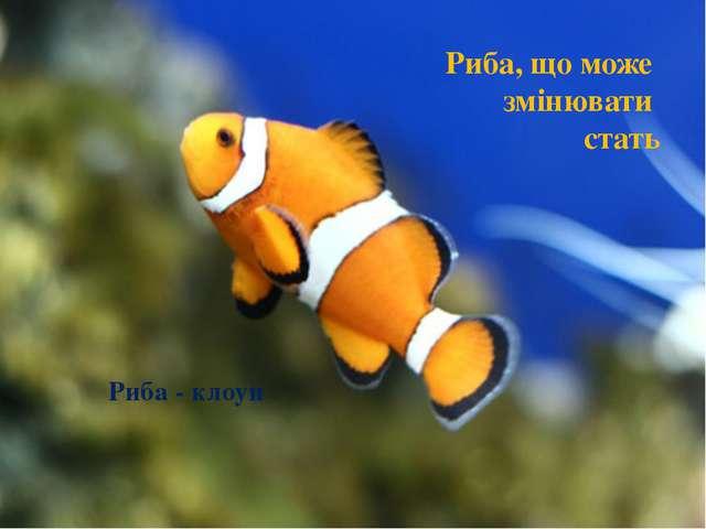 Риба, що може змінювати стать Риба - клоун