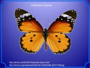 Симметрия в природе http://2krota.ru/2009/06/27/babochki-chast-2.html http://