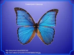Симметрия в природе http://pda.privet.ru/post/69351242 http://s56.radikal.ru/