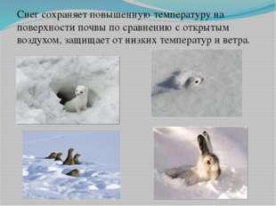 Снег сохраняет повышенную температуру на поверхности почвы по сравнению с отк