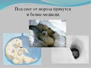 Под снег от мороза прячутся и белые медведи.