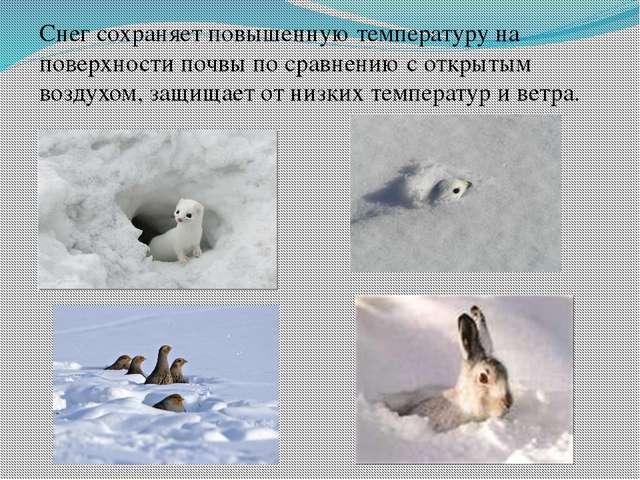 Снег сохраняет повышенную температуру на поверхности почвы по сравнению с отк...