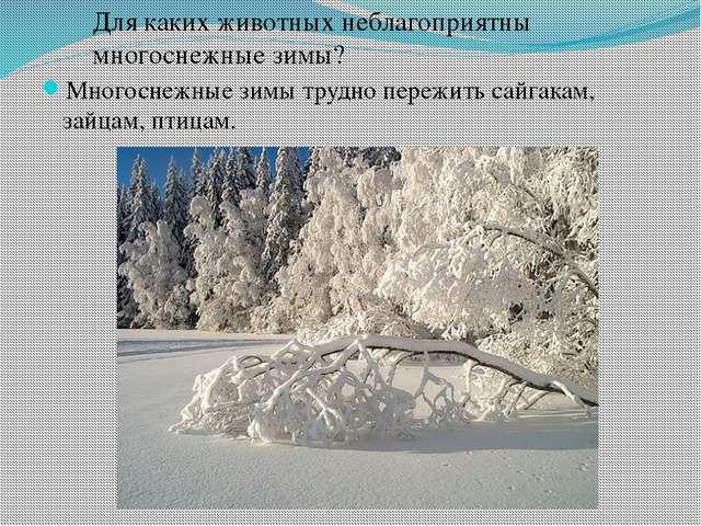 Многоснежные зимы трудно пережить сайгакам, зайцам, птицам. Для каких животны...