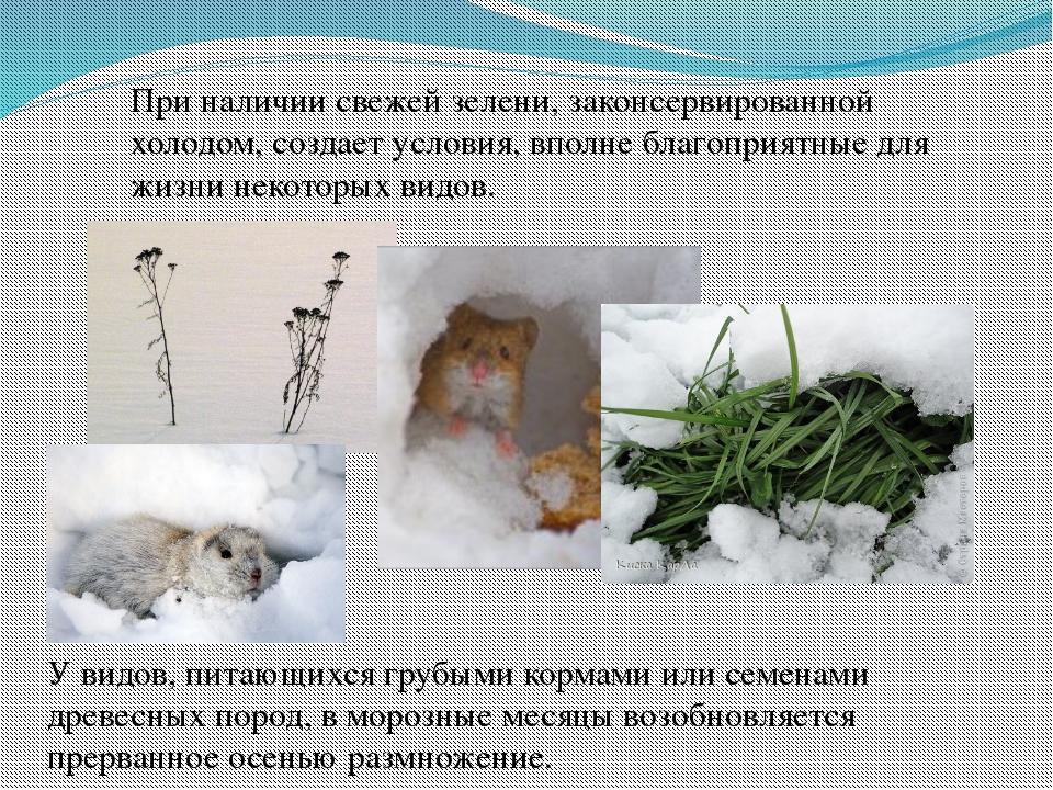 При наличии свежей зелени, законсервированной холодом, создает условия, вполн...