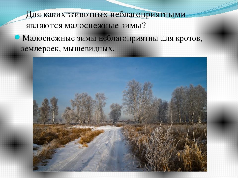 Малоснежные зимы неблагоприятны для кротов, землероек, мышевидных. Для каких...