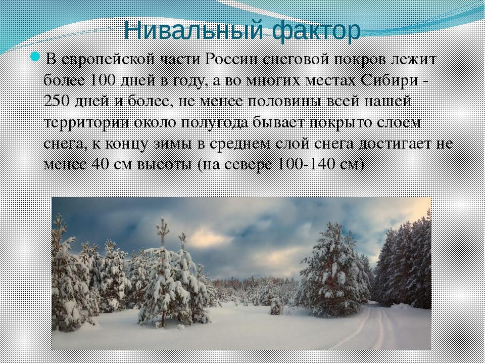 Нивальный фактор В европейской части России снеговой покров лежит более 100 д...