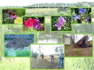 Посадили на клумбах однолетние цветы Завезли грунт. Завезли грунт на клумбы