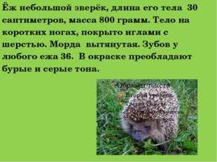 Ёж небольшой зверёк, длина его тела 30 сантиметров, масса 800 грамм. Тело на