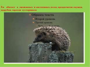 . Ёж обитает в смешанных и лиственных лесах, предпочитая опушки, вырубки, за